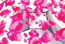 Aleksandra VASOVIC (1967) - Disposition of Fluorescent Pink Rose Petals in Time/Space