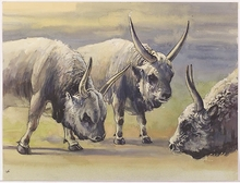 "Roland STRASSER - Drawing-Watercolor - ""Yaks"", Watercolor, 1950s"