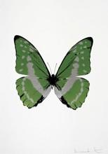 达米恩•赫斯特 - 版画 - The Soul (Leaf Green)