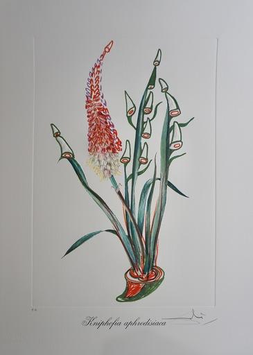 Salvador DALI - Grabado - Florals Rhinoceros Stock