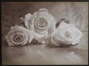 Harold Leroy HARVEY - Fotografia - Roses, Still Life