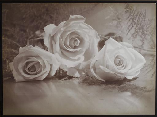 Harold Leroy HARVEY - Photo - Roses, Still Life