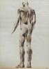 Luciano MIORI (1921-2006) - Male Nude - Back View