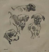 "Robert FUCHS - Drawing-Watercolor - ""Puppy Studies"" by Robert Fuchs, ca 1930"