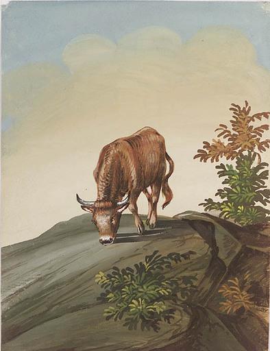 "Alexander Johann DALLINGER VON DALLING - 水彩作品 - ""Grazing Cow"", Gouache, early 20th Century"