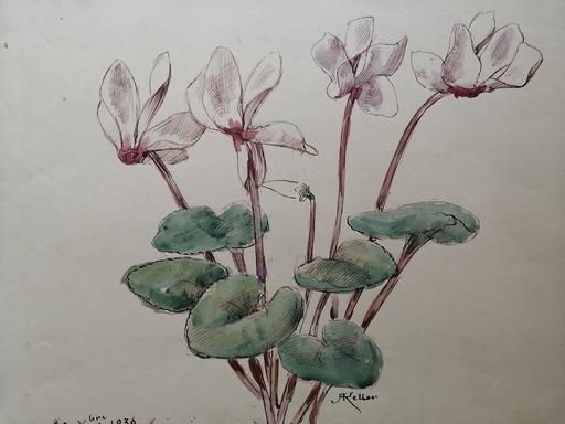 Alfred KELLER - Drawing-Watercolor - Cyclamen