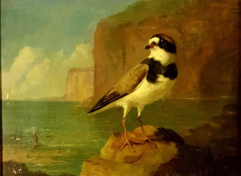 Archibald THORBURN - Pintura - oiseau marin