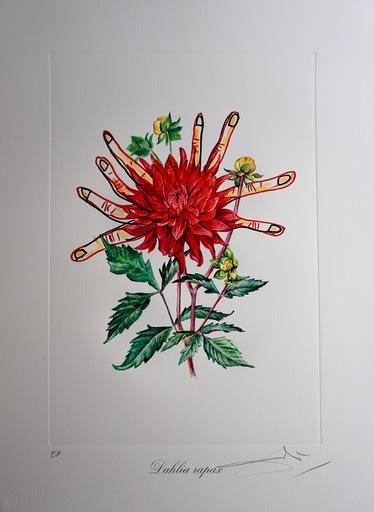 Salvador DALI - Grabado - Florals Dahlias of Dali
