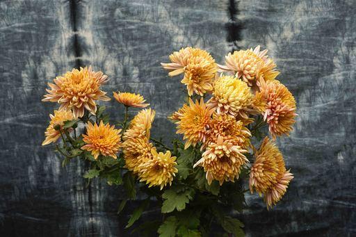 Sumit MEHNDIRATTA - Painting - Orange Botany