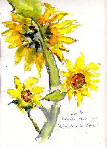 Jean-Pierre CHEVASSUS-AGNES - Dessin-Aquarelle - fleurs de Tournesols de la Loire 42