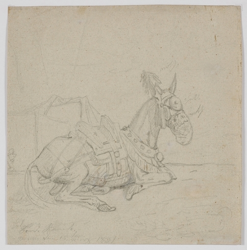 "Ferdinand RAUCH - Disegno Acquarello - ""Study of a Donkey"" by Ferdinand Rauch, 1831"