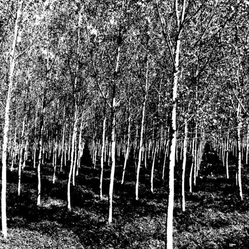 Rüdiger WÖRSTER - Pintura - Der arithmetische Wald