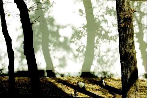 Abbas KIAROSTAMI - Grabado - Trees and Crows No.54