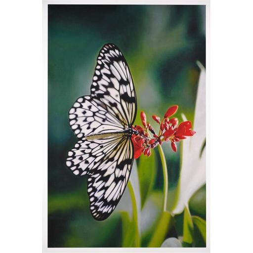 Damien HIRST - Stampa Multiplo - Oleander Lithograph