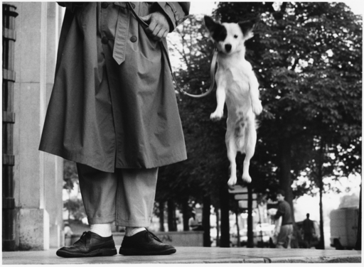 Elliott ERWITT - Photography - France, Paris 1989, jumping dog