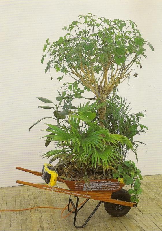 Mark DION - Sculpture-Volume - Wheelbarrows of Progress - Tropical Rainforest Preserves -