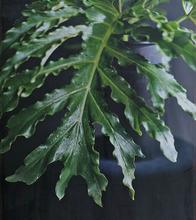 Caroline CHIU - Fotografia - Leaf
