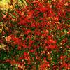 AKKADIA - Stampa-Multiplo - Quatre Saisons IV / Series Hanging Gardens
