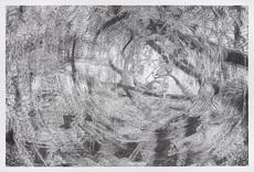 Alain HUCK - Drawing-Watercolor - Salix III