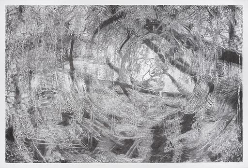 Alain HUCK - Disegno Acquarello - Salix III