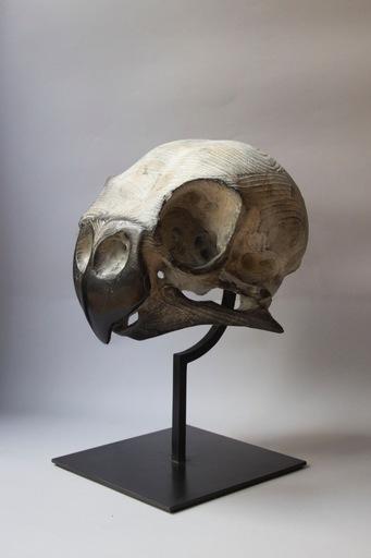 Quentin GAREL - Scultura Volume - Crâne de Perruche ondulée