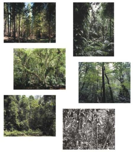 Thomas STRUTH - Print-Multiple - Paradies - portfolio of six works