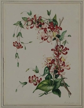 "Franz Xaver GRUBER - Drawing-Watercolor - ""Flower Study"" by Franz Xaver Gruber, ca 1840"