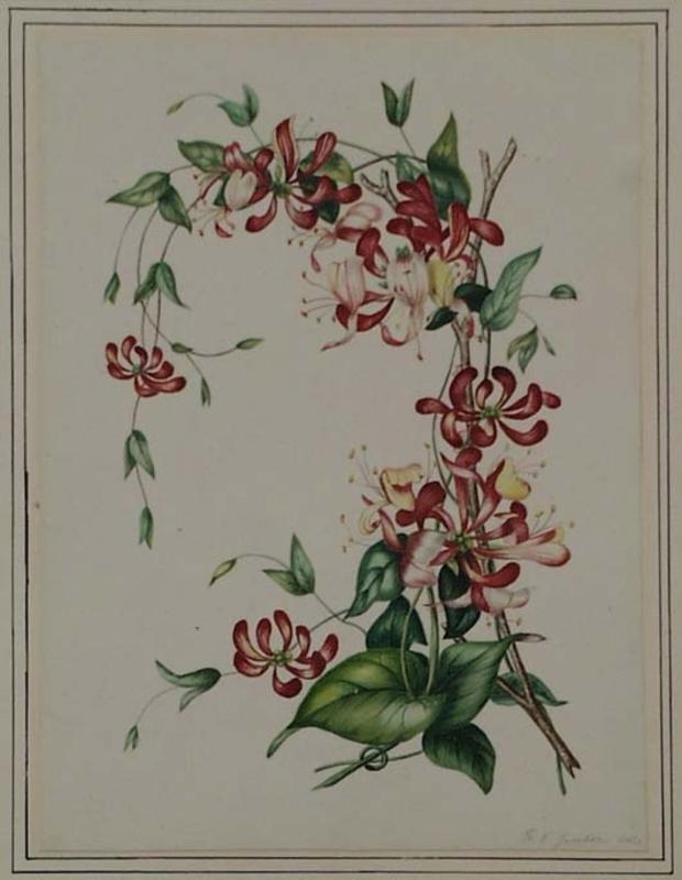 "Franz Xaver GRUBER - Zeichnung Aquarell - ""Flower Study"" by Franz Xaver Gruber, ca 1840"
