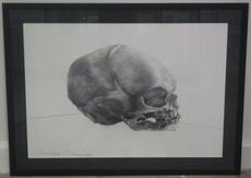 David NICHOLSON - Dibujo Acuarela - Baby Skull