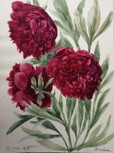 Alfred KELLER - Drawing-Watercolor - Pivoines