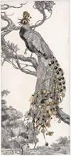 Bruno MALLART - Disegno Acquarello - El cant dels ocelles