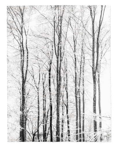 Gilles LORIN - Fotografia - Reaching to the Sky, White Study