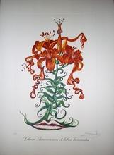 Salvador DALI (1904-1989) - TIGER LILIES OF THE TEATRE. LILIUM AURANCACIUM ET LABRA