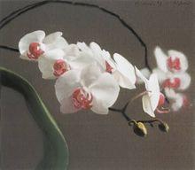 Gerhard RICHTER - Grabado - Orchid IV