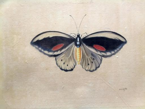 LA ROCHE LAFFITTE - Zeichnung Aquarell - Papillon