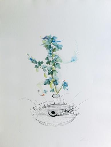 Salvador DALI - Grabado - Flor/Dali Les Fruits Gooseberry