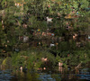 Steve SABELLA - Fotografia - On Earth