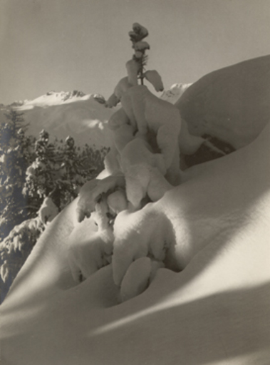 Andreas PEDRETT - Photo - (Alpine landscape, tree covered with snow)