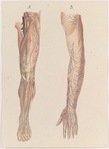 "Johann Daniel W. HARTMANN - Drawing-Watercolor - ""Anatomical Study"", early 19th Century"