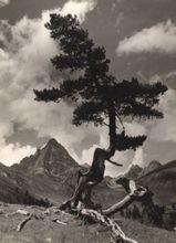 Johann FEUERSTEIN - Photography - Valminzer