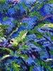 Lelia PISSARRO - 绘画 - Roger Howard's ferns
