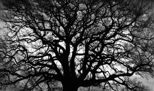 Robert LONGO - Stampa Multiplo - Untitled (Tree)