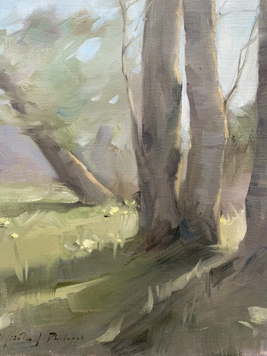 Nicky PHILIPPS - Pittura - Sycamores in spring