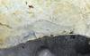 Joseph FAFARD - Skulptur Volumen - Teevo's Mom (Birthing II)