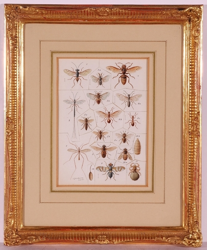"Josef FLEISCHMANN - Dessin-Aquarelle - ""Insects"", ca.1900"