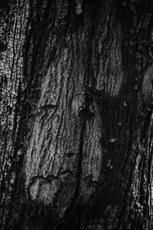 Pierre BOILLON - Photo - Couple Modigliani