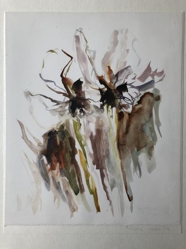 Wilhelm FROSTING - Disegno Acquarello - 86 Studie, Weiße Iris