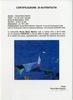 Nicola Maria MARTINO - Painting - Per alti venti, grecale