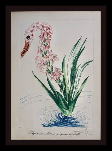 Salvador DALI - Stampa-Multiplo - Florals Water-Hybiscus Swan