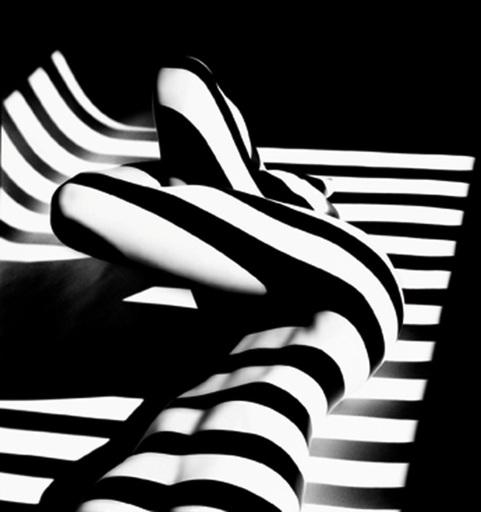 Francis GIACOBETTI - Fotografia - Zebra 14